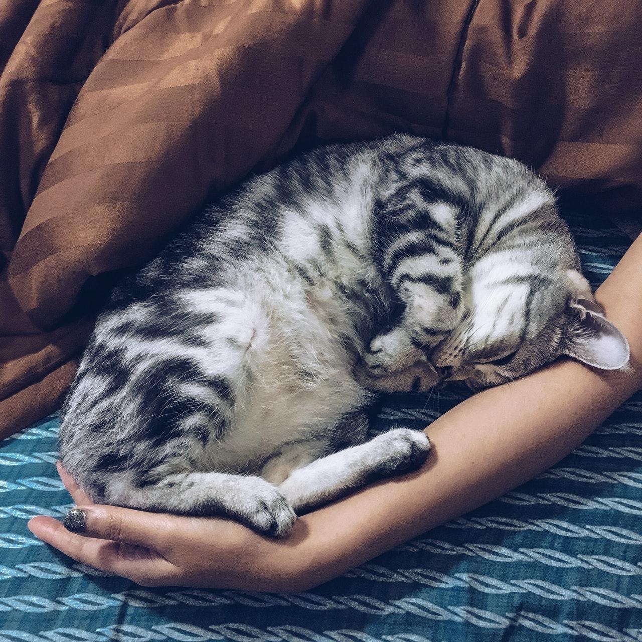 dormire col gatto